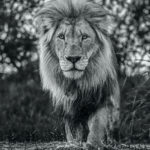 Basic Instinct David Yarrow