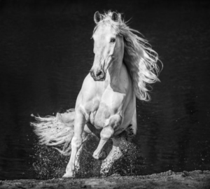 Horsepower David Yarrow