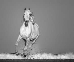Pegasus David Yarrow