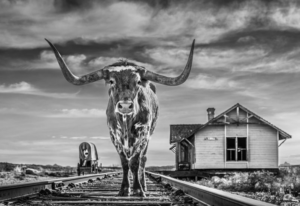 The End of the Line David Yarrow
